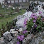 orto-botanico-novezzina-004